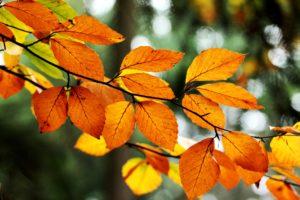 leaves, Orange, Yellow, Branch, Tree, Bokeh, Fall, Nature, Autumn