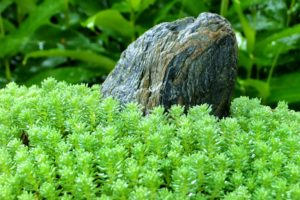 green, Close up, Nature, Grass, Stones, Plants, Macro