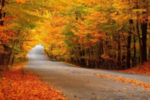 landscapes, Nature, Trees, Forest, Leaves, Autumn, Fall, Seasons, Roads, Colors