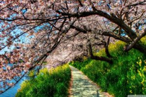 nature, Trees, Flowers, Spring, Flowered, Trees