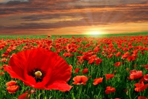 nature, Flowers, Landscapes, Fields, Poppy, Poppies, Color, Contrast, Sunrise, Sunset, Sky, Clouds, Manipulation, Cg, Digital, Art, Sunlight, Sunbeams
