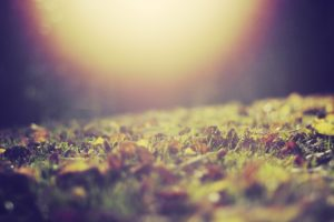 nature, Leaves, Grass, Sunlight, Macro, Depth, Of, Field, Ground, Fallen, Leaves