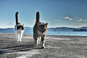 animals, Cats, Felines, Fur, Whiskers, Beaches, Water, Sound, Bay, Mountains, Sky, Clouds