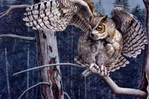 animals, Birds, Owls, Raptor, Predator, Wings, Wildlife, Feathers, Face, Eyes, Art, Artistic, Nature, Trees, Forests, Print, Paintings