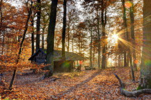 world, Architecture, Buildings, Houses, Rustic, Decay, Ruins, Nature, Landscapes, Trees, Forest, Fall, Autumn, Seasons, Leaves, Color, Sunlight, Sunbeam, Sun, Sunrise, Sunset