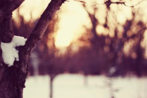 sunset, Nature, Winter, Snow, Trees, Macro, Depth, Of, Field, Branches