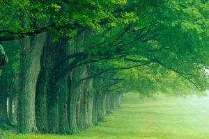 green, Nature, Trees, Summer, Louisville