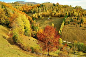 hills, Trees, Forest, Autumn, Fall, Sheep, Animals, Pasture, Fields