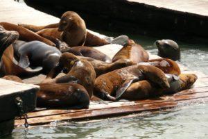 sea, Lions, Seal, Seals, Lion,  35