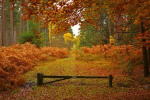 new, Forest, In, Hampshire, England, Autumn, Landscape