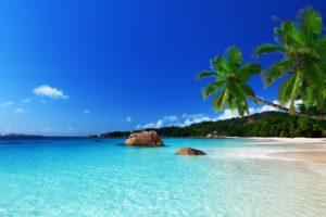 tropical, Paradise, Beach, Ocean, Sea, Palm, Summer, Coast