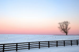 fence, Nature, Landscapes, Winter, Snow, Trees, Sky, Sunset, Sunrise