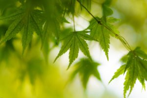 green, Leaf, Dew, Nature, Walppaper, Branch, Tree, Macro