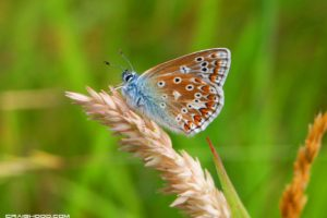 butterfly, Nature, Insects, Macro, Zoom, Close up, Wallpaper