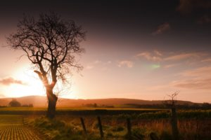 sunset, Field, Tree, Fence, Landscape