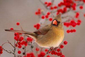 bird, Animal, Beautiful, Wild, Wings, Exotic, Birds