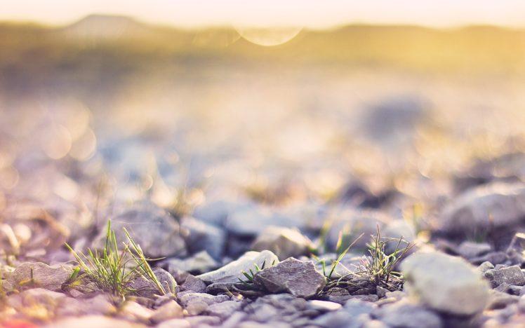 nature, Rocks, Macro, Depth, Of, Field HD Wallpaper Desktop Background