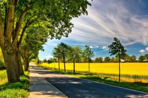 clouds, Trees, Leaves, Wildlife, Fields, Path, Spring,  season , Roads, Sunny