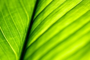 green, Close up, Nature, Leaves, Macro, Structure