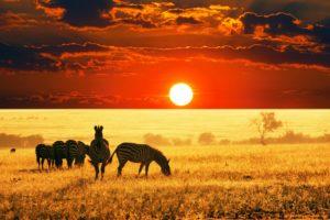 wilds, Animals, Sunset, Sunrise, Fields, Summer, Clouds, Nature, Earth, Landscapes, Africa, Reserves, Zebra, Sky
