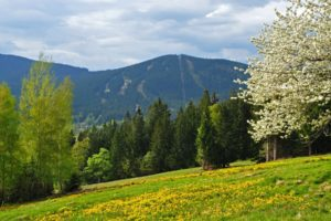 spring, Mountains, Forest, Field, Czech, Republic, Bohemian, Forest