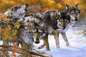 fantasy, Original, Art, Artistic, Artwork, Wolf, Wolves
