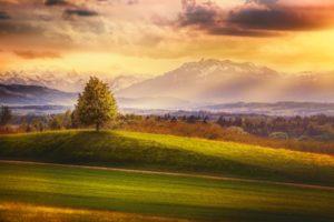 tree, Glow, Sunset, Alps, Mountain, Mountain, Ridge, Mountain, Evening, Landscape, Alps, Cloud, Switzerland
