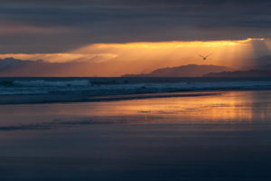 new, Zealand, Beach, Beaches, Coast, Sea, Ocean, Evening, Sunset, Orange, Sky, Clouds, Birds, Flying, Silhouette
