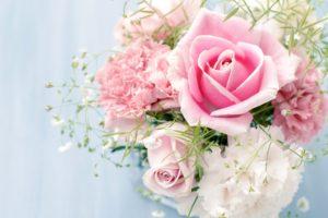roses, Flowers, Carnations, White, Flower, Rose