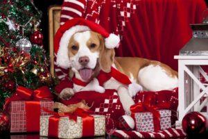 christmas, Holiday, Seasonal, New, Year