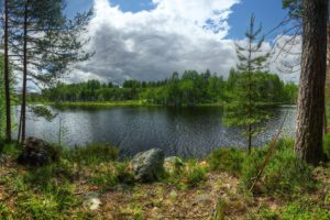 russia, Lake, Forests, Stones, Trunk, Tree, Island, Kilpola, Lake, Ladoga, Karelia, Nature