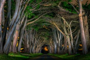 beautiful, Avenue, Grass, Natural, Arch, Road, Trees, Nocturnal