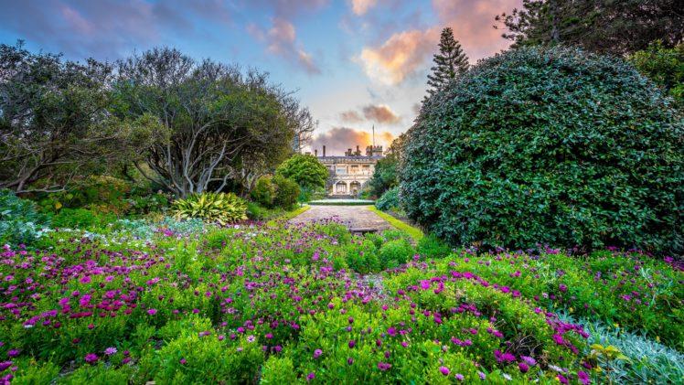 australia, Parks, Cosmos, Plant, Sydney, Shrubs, Trees, Nature HD Wallpaper Desktop Background